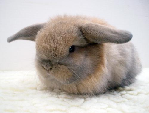 Mascotas conejos enanos - Casas para conejos enanos ...