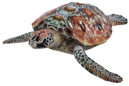 el habitat de las tortugas: