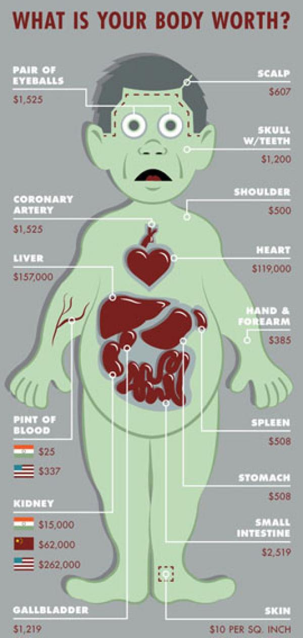 Atractivo Los órganos Del Cuerpo Humano Marcado Composición ...