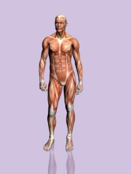 Conoce las zonas del cuerpo que no sirven para nada