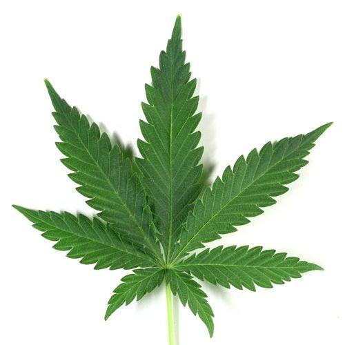 3 Estados de EEUU legalizan el consumo y la venta de marihuana