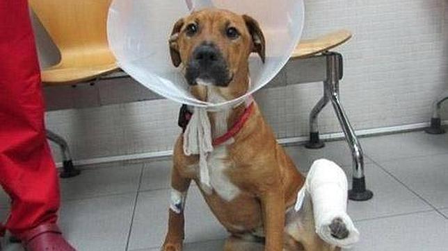 Curiosidades: 2.000 euros de multa por abandonar a perro con pata rota¡