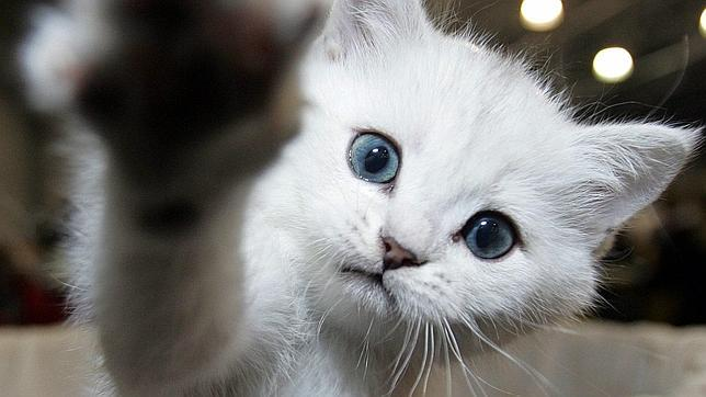 Curiosidades: Los gatos ignoran la voz de su dueño¡