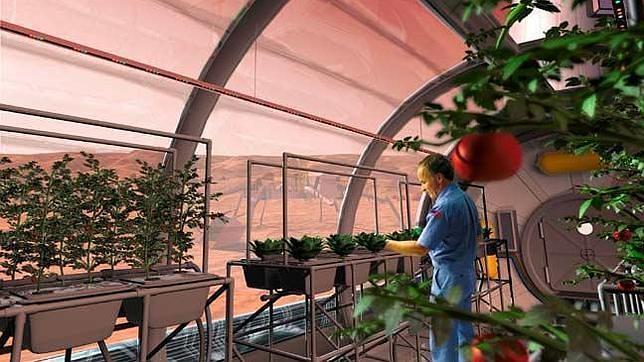 Insólito: La NASA quiere plantar nabos y albahaca en la Luna¡