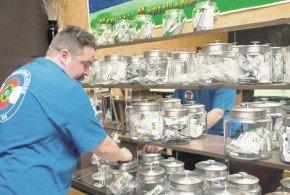 14 estados de EE.UU. buscarán legalizar la marihuana con fin recreativo