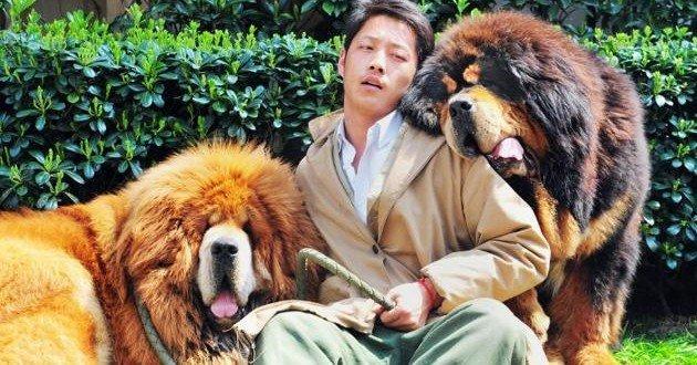 Insólito: Pagan 1,4 millones de euros por un perro - Fotos