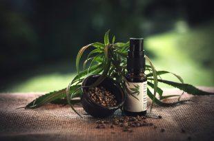 Conoce estos ejemplos de plantas medicinales que mejorarán tu vida