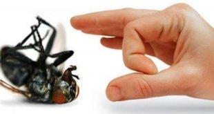 ¿Cómo eliminar las moscas?: Un remedio infalible