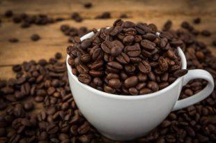 LA SEMILLA DEL CAFÉ: TODOS SUS SECRETOS