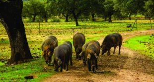 El jamón serrano es delicioso, versátil y también muy nutritivo