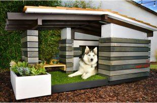 Consejos básicos a la hora de comprar una casa para perros